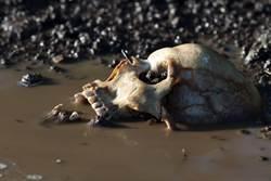 農場養百具屍體 腐化過程全曝光