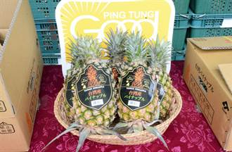 屏東鳳梨出運 外銷日本超市第一櫃