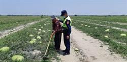 學甲大西瓜產期到 警局護瓜保農民收成