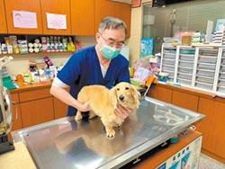 新北動物醫院 推線上看診