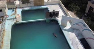 最孤獨海豚Honey病逝 水族館倒閉後「囚禁」水池寂寞餘生