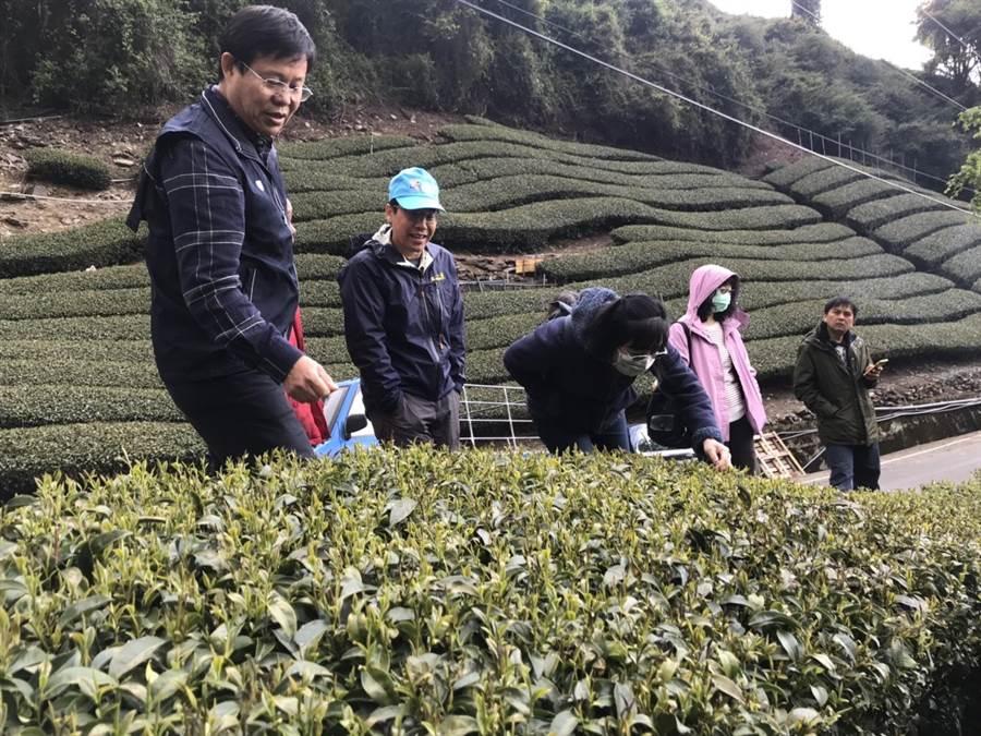 台中市農業局邀集相關單位赴梨山勘查霜害受損情況,初步判定茶葉整體災損面積超過20%。(台中市農業局提供/王文吉台中傳真)