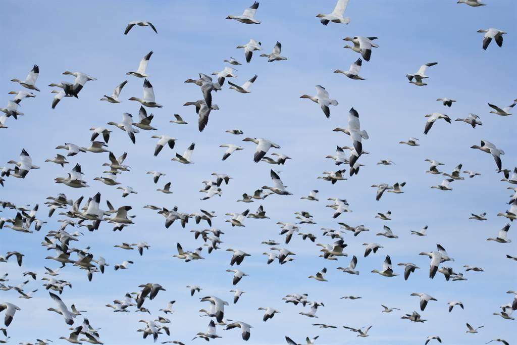 遇鳥群拍照捕捉意外畫面 萬人看呆(示意圖/達志影像)