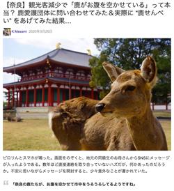 觀光客減 鹿群闖住宅區覓食?奈良公園澄清闢謠