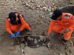 後龍鎮海角樂園發現死亡欖蠵龜 海巡隊獲報處理