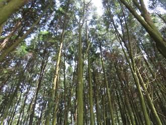 山區造林成美景 台南東山李仔園有祕境