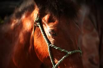 《獵奇筆記》古代戰馬速度快 為何卻矮如驢子?