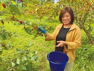 公館農會研發 紫蜜桑葚產品有優惠
