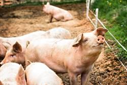 陸豬價連7周下降 每公斤大降6元人幣
