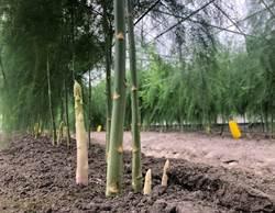 復興彰化蘆筍產業 打造高品質設施蘆筍品牌「蘆屋」