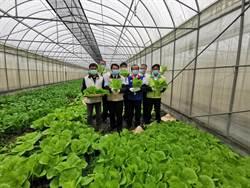 質與量並重 疫情中台南這間有機農場逆勢成長