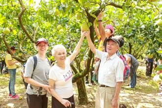 基隆柚桐芬芳之旅 穿梭山間景點體驗農產風情