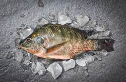 吃魚驚見「綠骨」超噁?行家:這超稀有