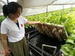 雲林唯一面板水耕農場成教育農場