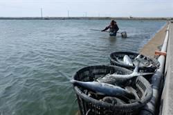 漁業紓困方案開跑 漁民怨申報時間太緊迫