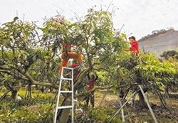 女青農組農工團 補人力缺口