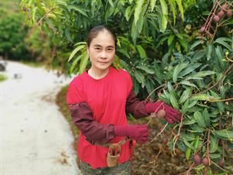 解決缺工問題  楠西女青農楊沁涓成立農工團