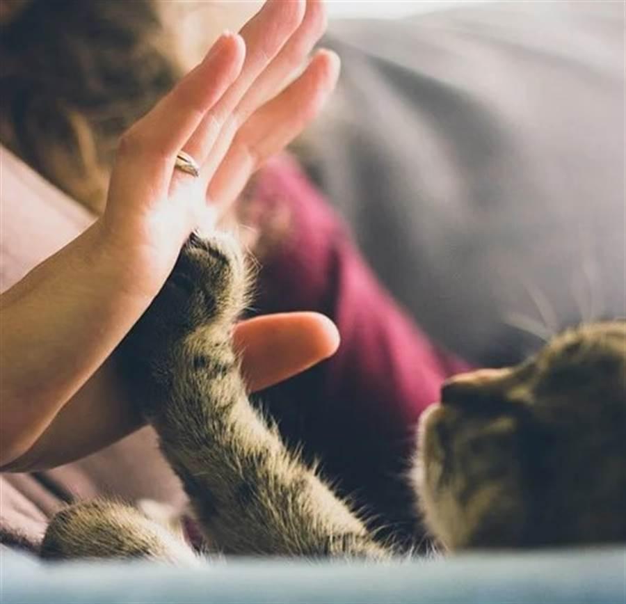 美國紐約和洛杉磯動物認養數量飆升200%,再次證明當你情緒低落,動物可能是最好的夥伴。(圖片來源:pixabay)