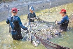漁業紓困 漁民怨申報時間太緊迫