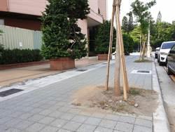 人行道樹穴疑似用水泥灌漿 護樹團體批害樹