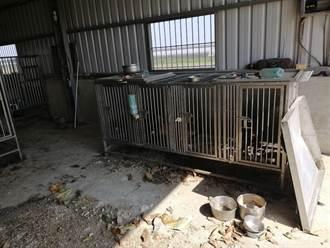 又見無良犬貓繁殖場 嘉縣家畜所開罰
