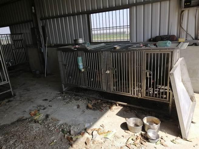 飼養場內環境惡劣,甚至還有動物的骸骨。(嘉義縣政府提供/張亦惠嘉縣傳真)