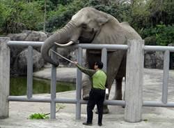 動物也念情!離開5年後 大象還記得曾照顧牠們的保育員