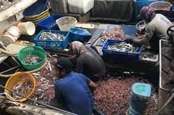 漁業紓困再1波 僱用非我國籍船員每人補助5700元
