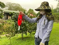 咖啡蟲蟲危機!農委會祭新招