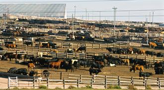 社會不穩定將至?疫情使美牛肉批發價飆新高