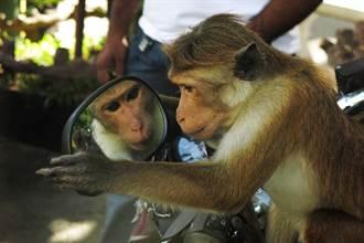 亞馬遜叢林放巨大鏡子 動物反應很驚人