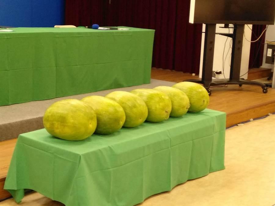 灑花!台灣連6天零確診,記者會的桌上也擺出幾顆大西瓜。(魏怡嘉攝影)