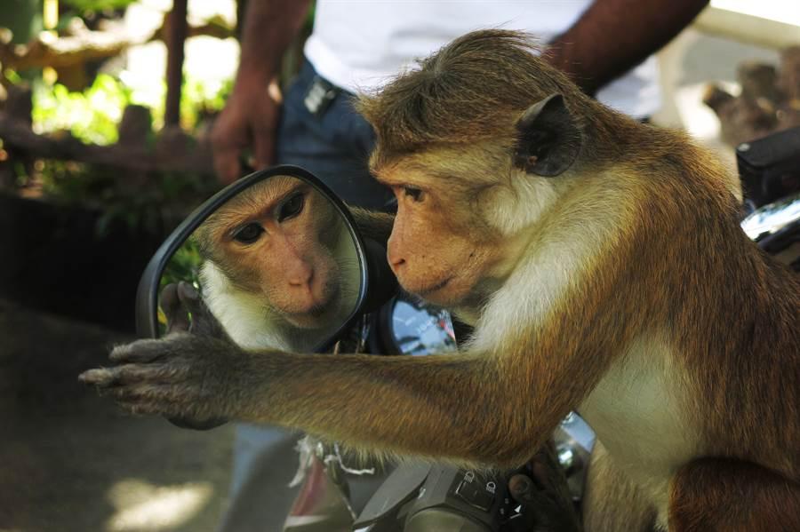 亞馬遜叢林放巨大鏡子 動物反應很驚人(示意圖/達志影像)