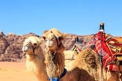 中東最聰明小國 用沙漠換來百億收入