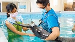 稀有糙齒海豚擱淺 送至基隆救治