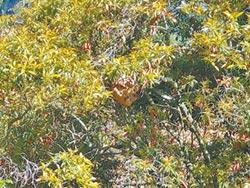 空拍機驚擾 虎頭蜂螫傷8遊客