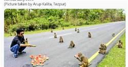 印度部長上傳「猴子吃瓜照」 網嘆:有些人比猴子還不如!