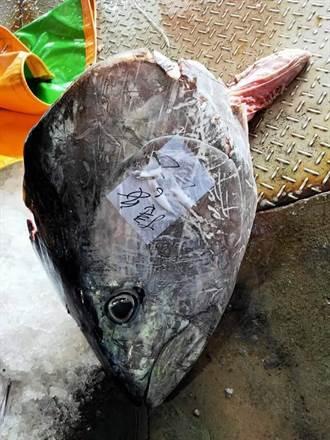 《老人與海》台東真實上演 見證漁民靠天吃飯的真實情況