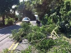 大樹橫倒通霄苗128線 警拿鏈鋸切割迅速排除