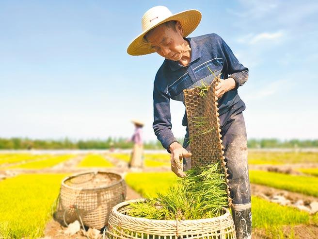大陸各地封城後出現糧食生產問題。(新華社資料照片)