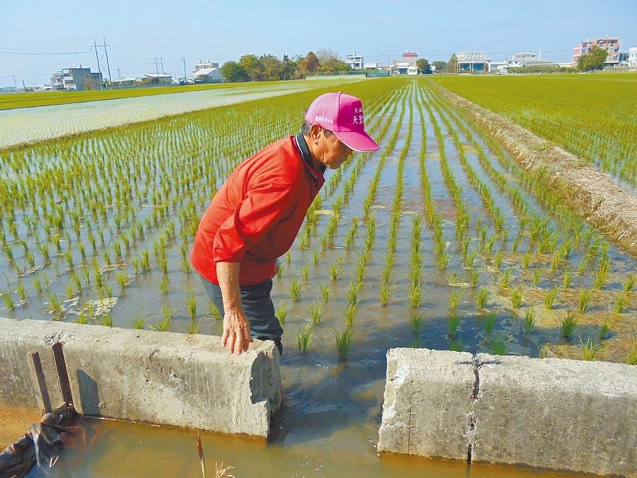 農民普遍反映肥料實名制難以符合實際需求的肥料量,尤其土庫等鄉鎮正值水稻和花生用肥高峰期,讓農民更苦惱,希望放寬或不要限量。(本報資料照片)