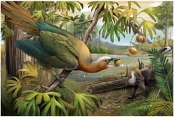 鳥類躲過生物大滅絕 關鍵出在牙齒演化