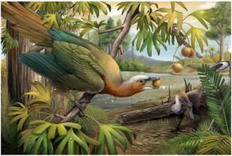 古鳥類逃過滅亡命運 關鍵秘密在牙齒