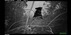 台東》樹上熊窩首次曝光 廣原小熊「逐窩踏實」