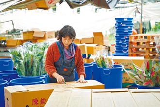 達邦花卉產業 調控供需維持正常運作