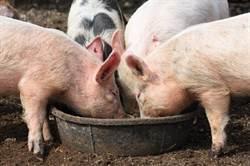 萬科跨界養豬 廣發徵才令
