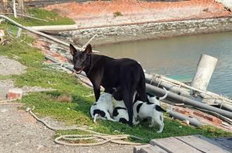 狗媽媽受傷 動物緊急救援小組馳援