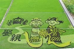 母親節去哪?苑裡彩繪稻田「老鼠娶親」完整亮相