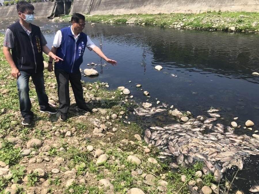 台中市議員楊正中說,雖已請環保局調查汙染源,但都查不到汙染源,而魚群死亡事件層出不窮。(盧金足攝)