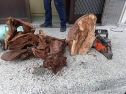 山老鼠集團前導車假車牌 砍掉百萬元珍貴林木